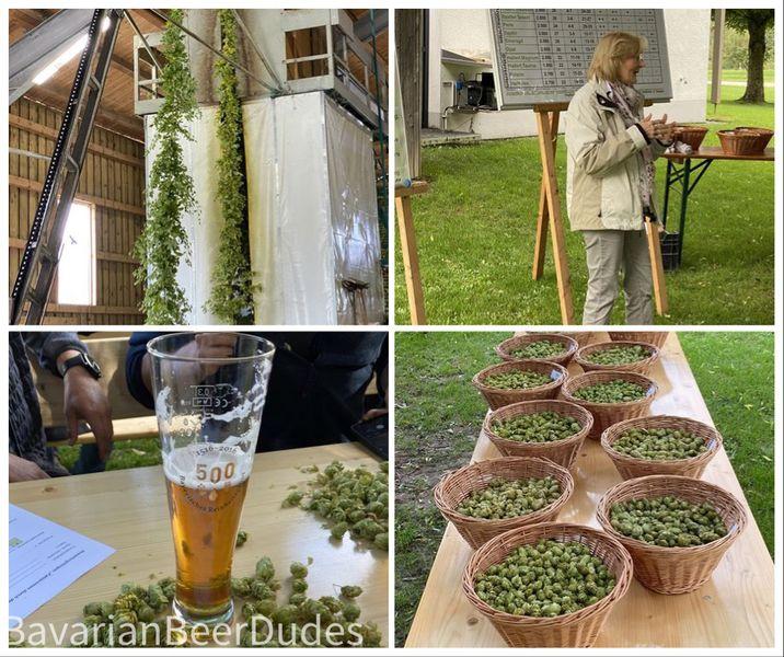 Read more about the article Hopfenforschungszentrum Hüll – Hier wird Hopfen geforscht!